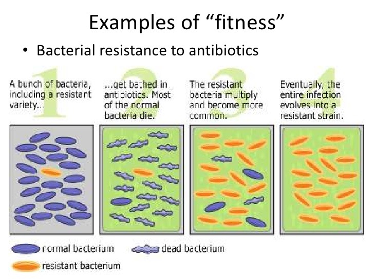 bacteria resistance to antibiotics Antibiotic resistant bacteria can cause illnesses that were once easily treatable with antibiotics to become untreatable, leading to dangerous infections antibiotic-resistant bacteria are often more difficult to kill and more expensive to treat.