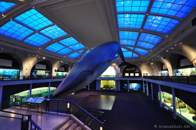 Hall of Ocean Life