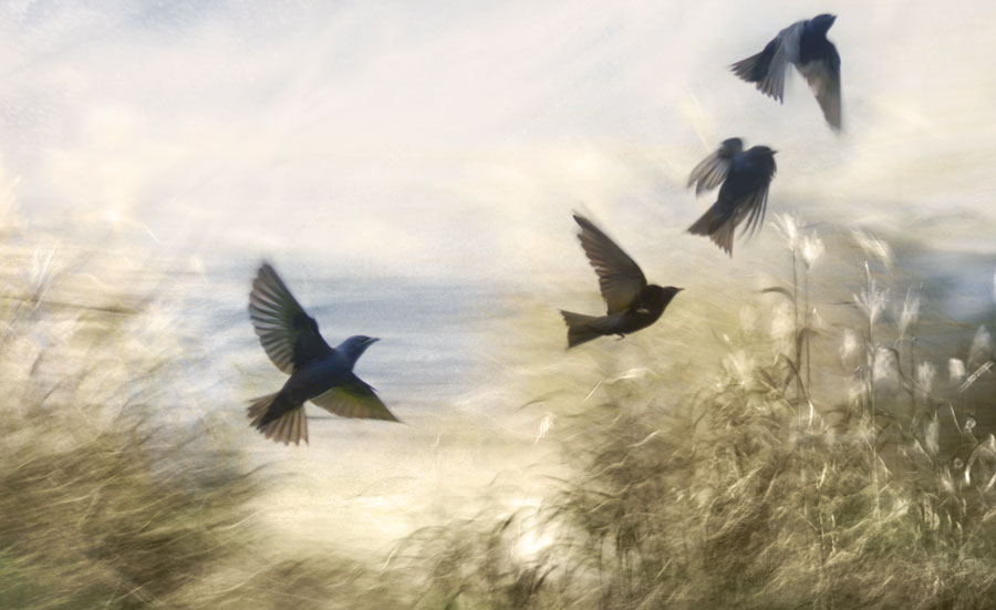 swallow-the-sky1