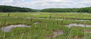 300px-bride-brook-salt-marsh-s